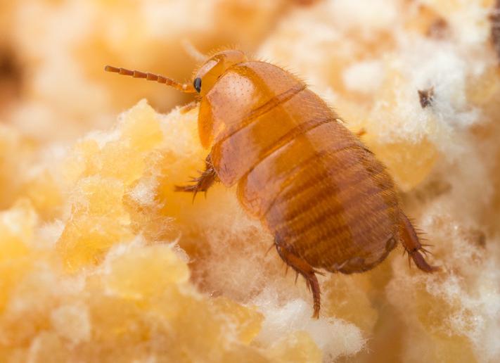 Flight of the Cockroach
