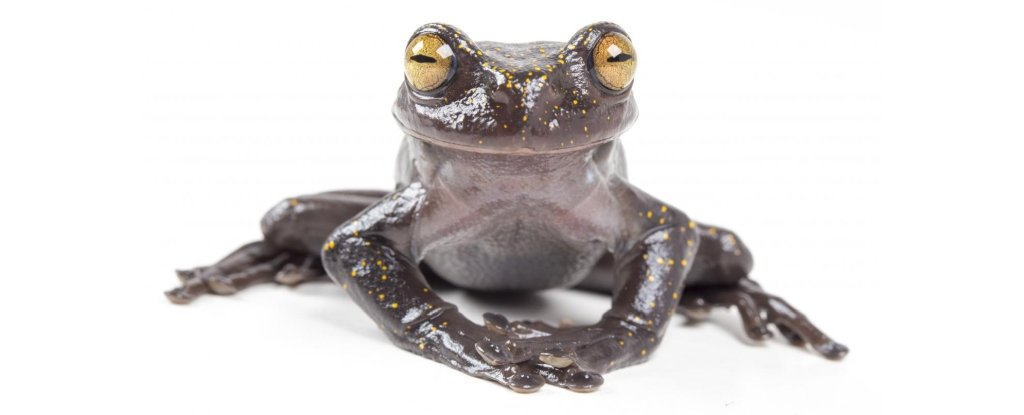 hillisi torrent frog pose 1024