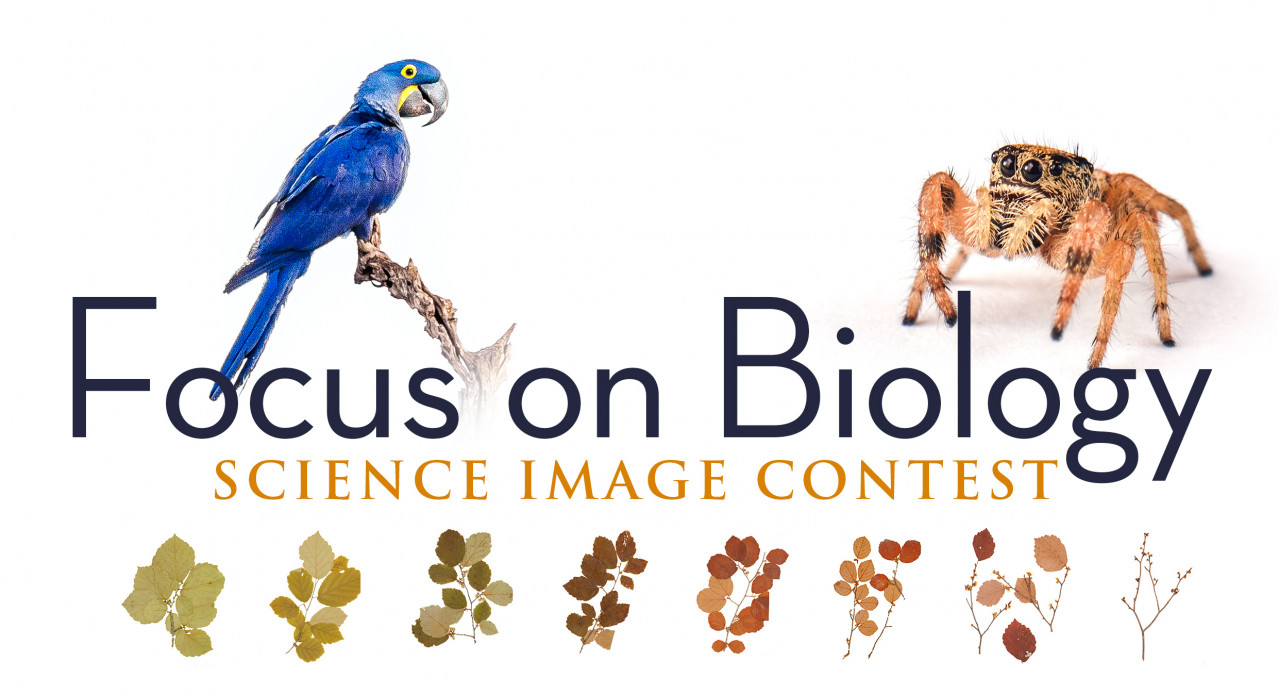 Focus on Biology - Science Imaging Contest 2018 - -