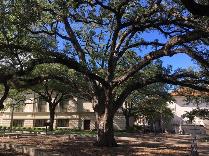 BACKYARD BIODIVERSITY: the Texas Live Oak